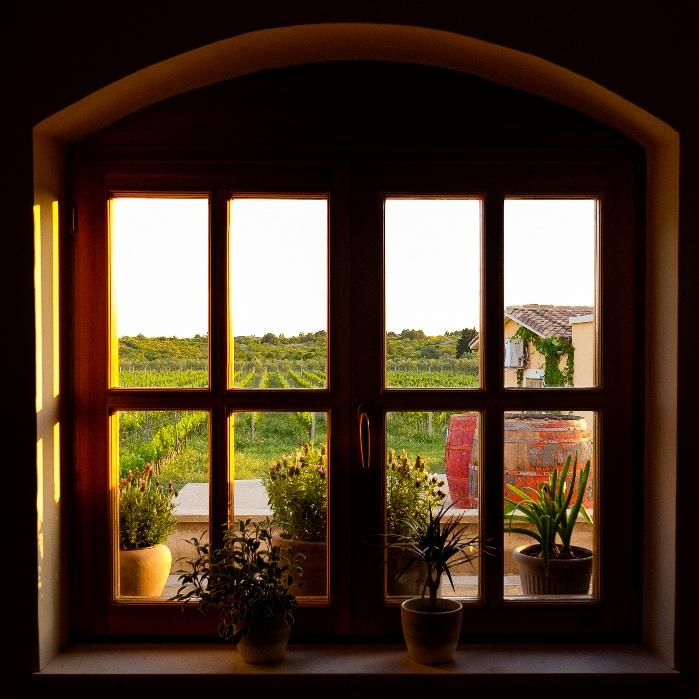 A view at Baraka vineyards